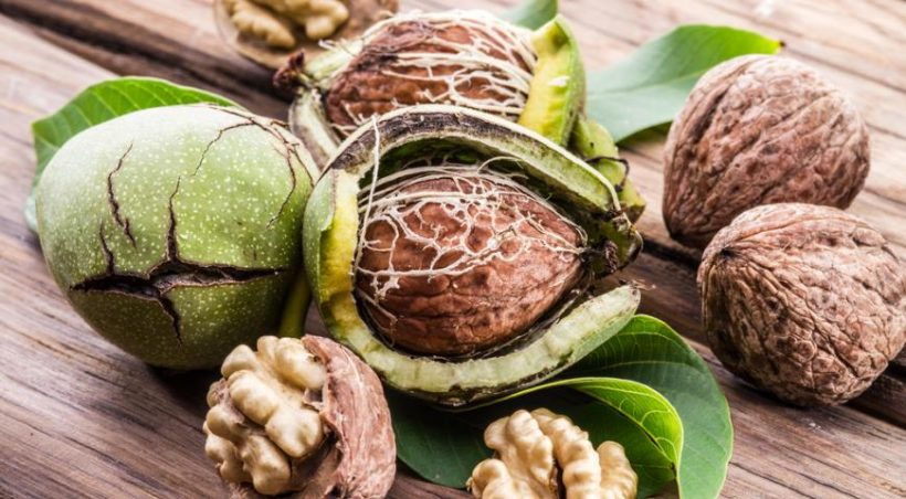 Secrets of healing and delicious walnuts