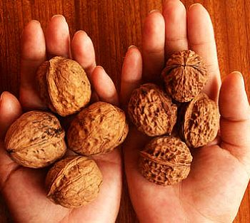Key rules of walnuts choice